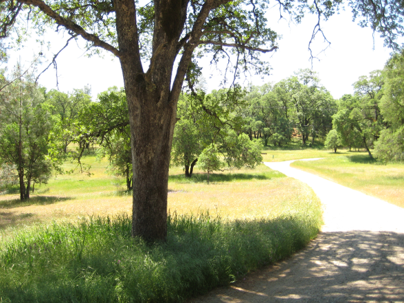 ranch spring 1