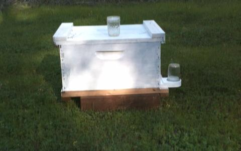 Available Immediately: One story hive body, partially furnished by previous tenants, could use some spring cleaning.  Permitted for up to two additional stories, as needed. All mod cons. Nice neighborhood, lavender bushes nearby. If interested, call.